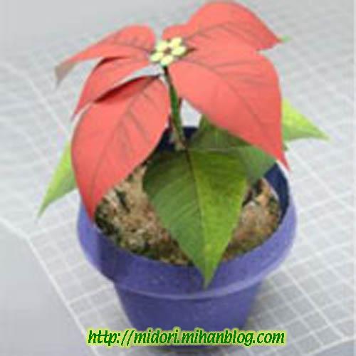 [تصویر: Christmas-FlowerL.jpg]